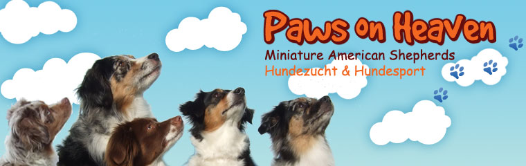 Paws on Heaven - Mini Aussies